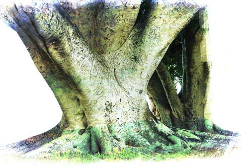 Mo_nedlandstrees2_web