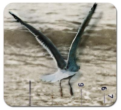 Mo_beachbird2