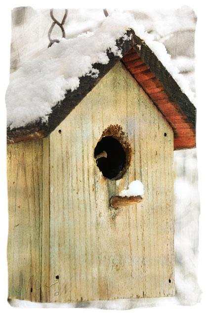 Mo_birdhouse_sm