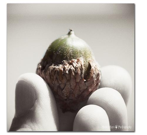 Mo_acorn_sm