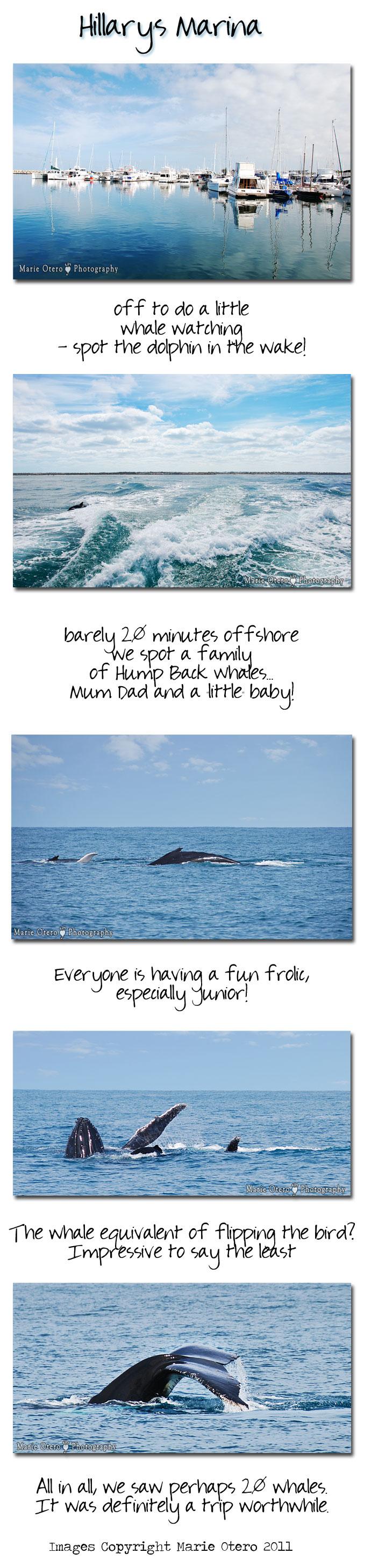 Tp_whales10nov2011