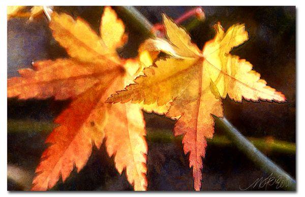 Mo_fall-2011